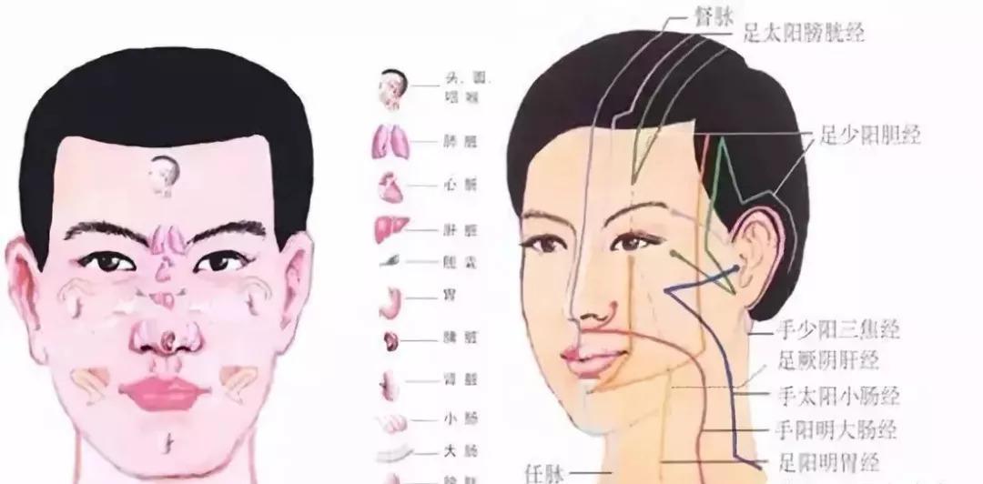 脸上的斑代谢原理_脸上皮肤代谢图片