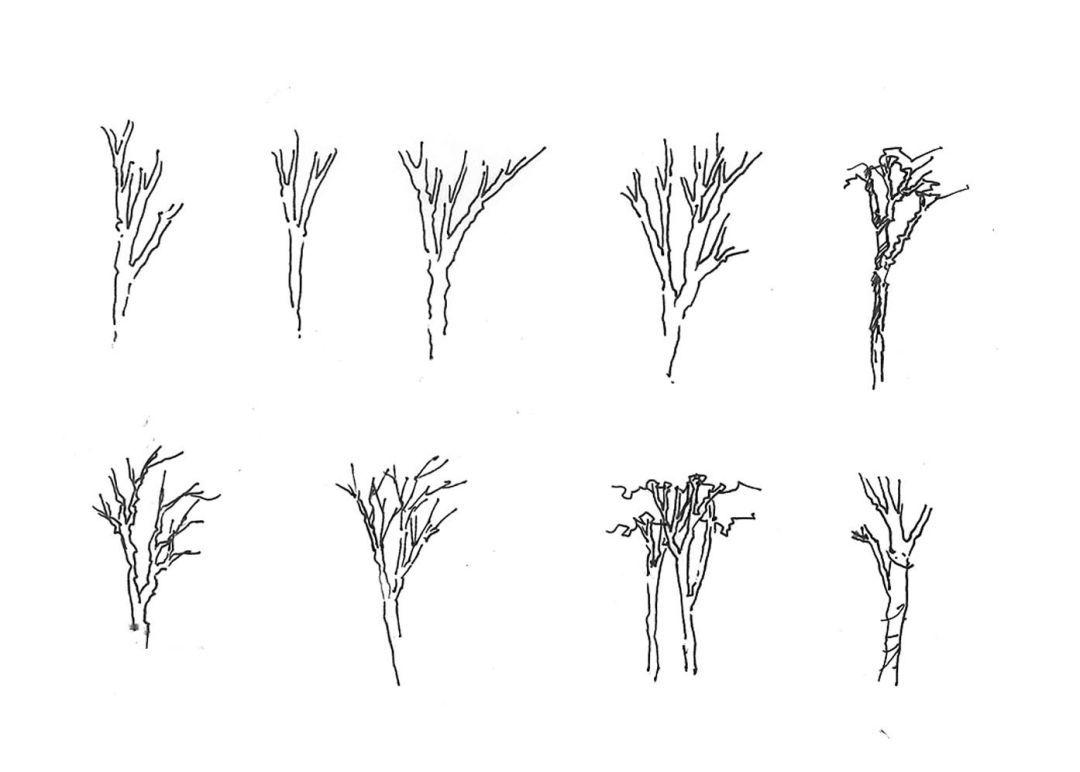手绘教程 | 植物景观表现之乔木表现