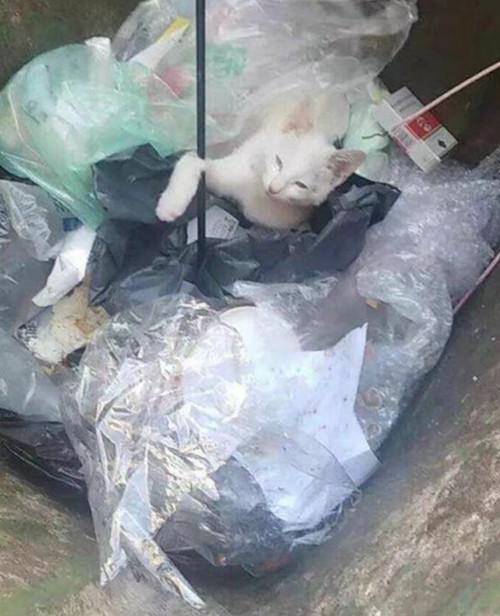 大一新生射杀流浪猫被退学,看了这张图片,你还会同情他吗?