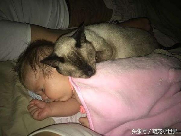 胆小流浪喵保护小主人鼓起勇气吓退狗狗,每天抱抱睡一起