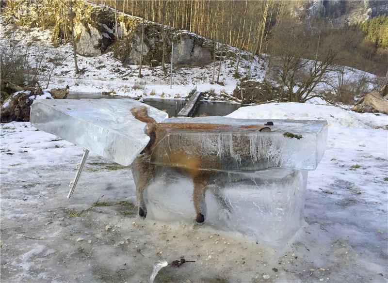 鏡頭下:極寒天氣下,被凍住的動物生命最後一幕!
