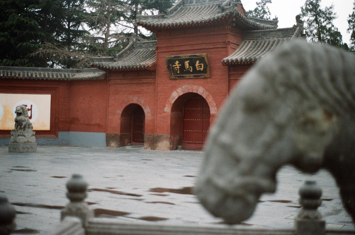 河南这景点两匹白马,被游客骑着照相已变成了黑马,网友:痛心!