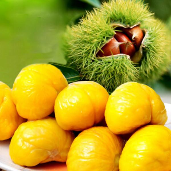 板栗长虫发霉原因如何预防板栗变质发霉长虫及保鲜