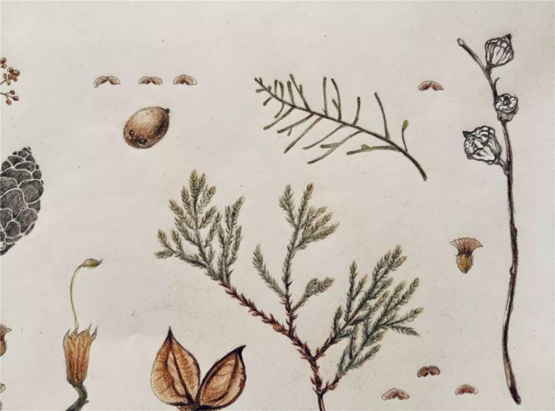 政务 正文  植物手绘笔记(自然笔记) 用绘画和简单说明文字相结合的
