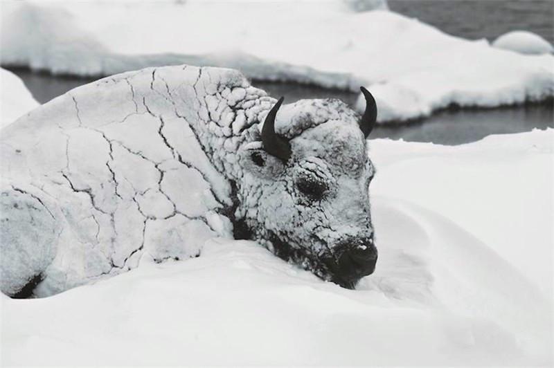 鏡頭下:極寒天氣下,被凍住的動物生命最後一幕!-華夏娛樂360