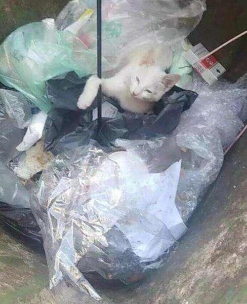 大一新生射杀流浪猫被退学, 这样处理过分了吗? 网友: 该受点教育了!