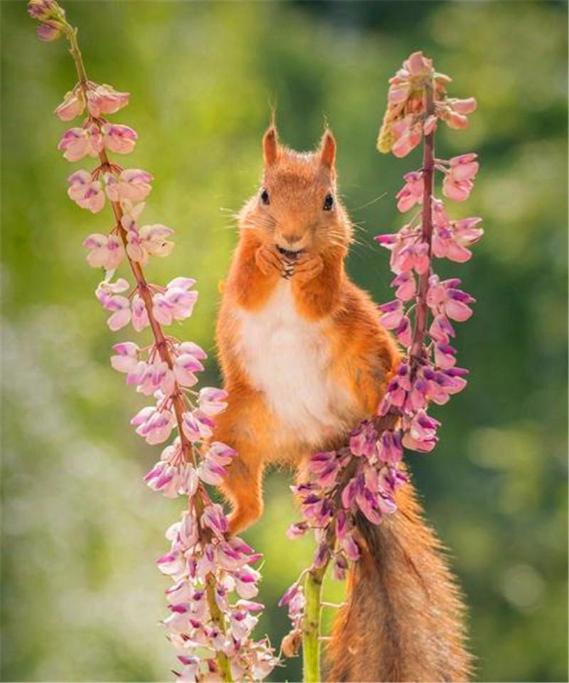 小松鼠花茎上表演高难度动作,可惜技艺不到家,下秒乐极生悲