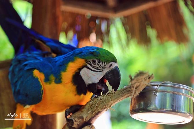 三亚彩色动物园,探寻各种可爱的动物们