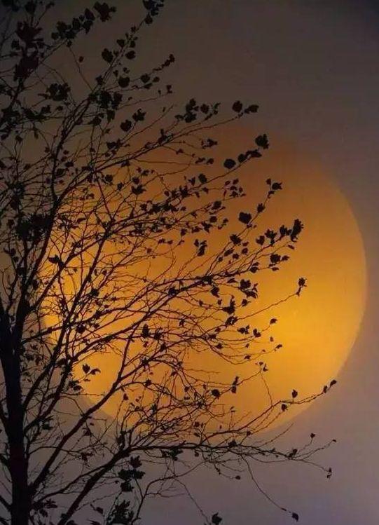 为你读诗 中秋月下饮