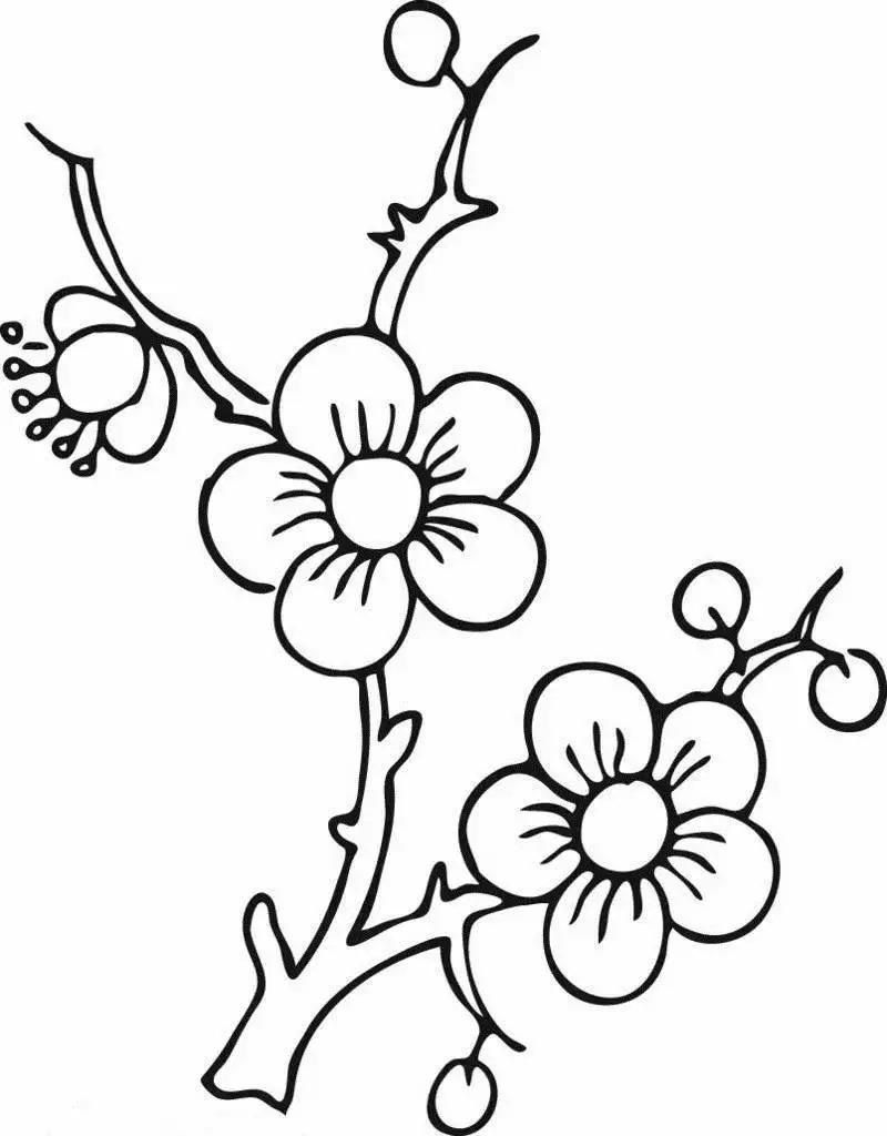 学一学画一画,幼儿园植物简笔画大全