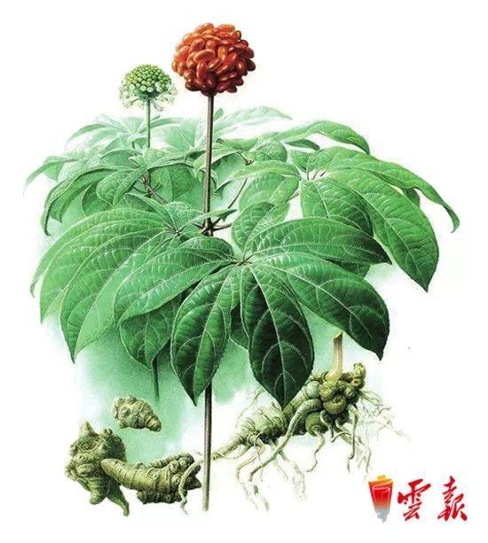 云南省10佳茶叶、花卉、蔬菜、水果、中药材品牌公示 请你来投票