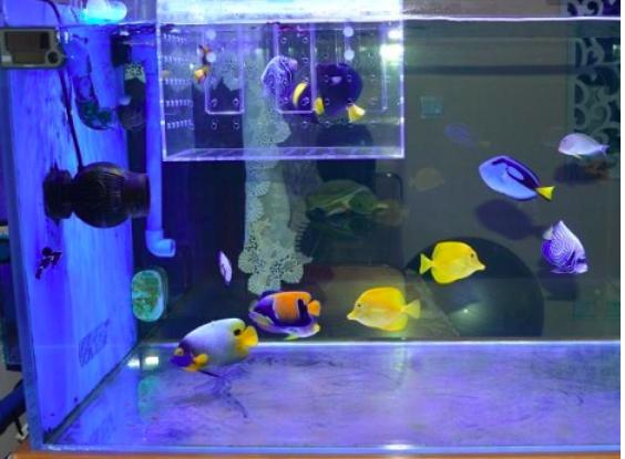 如何能让鱼缸水泵更静音