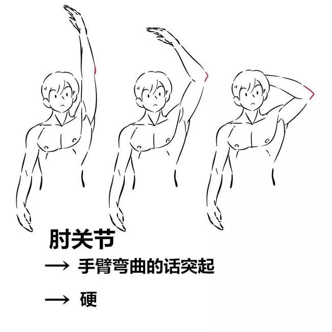 【精品】手臂结构绘画教程