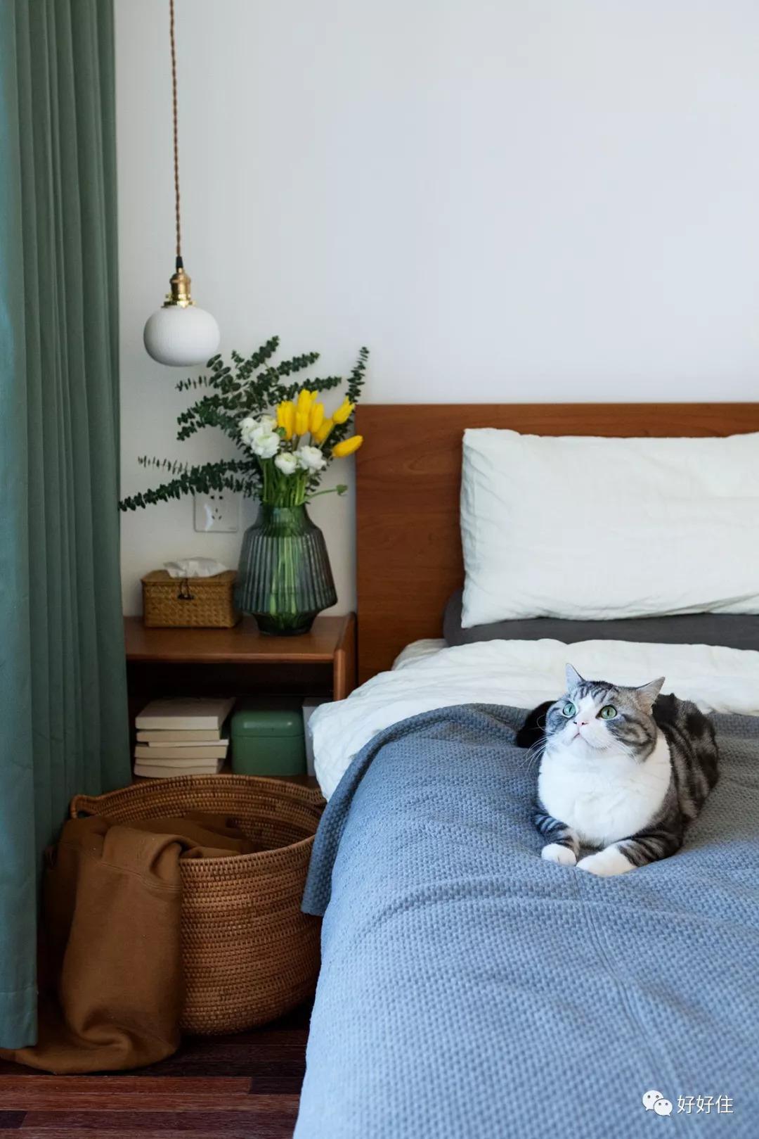 室内窗和障子门这60㎡日式小户适合人猫共乐