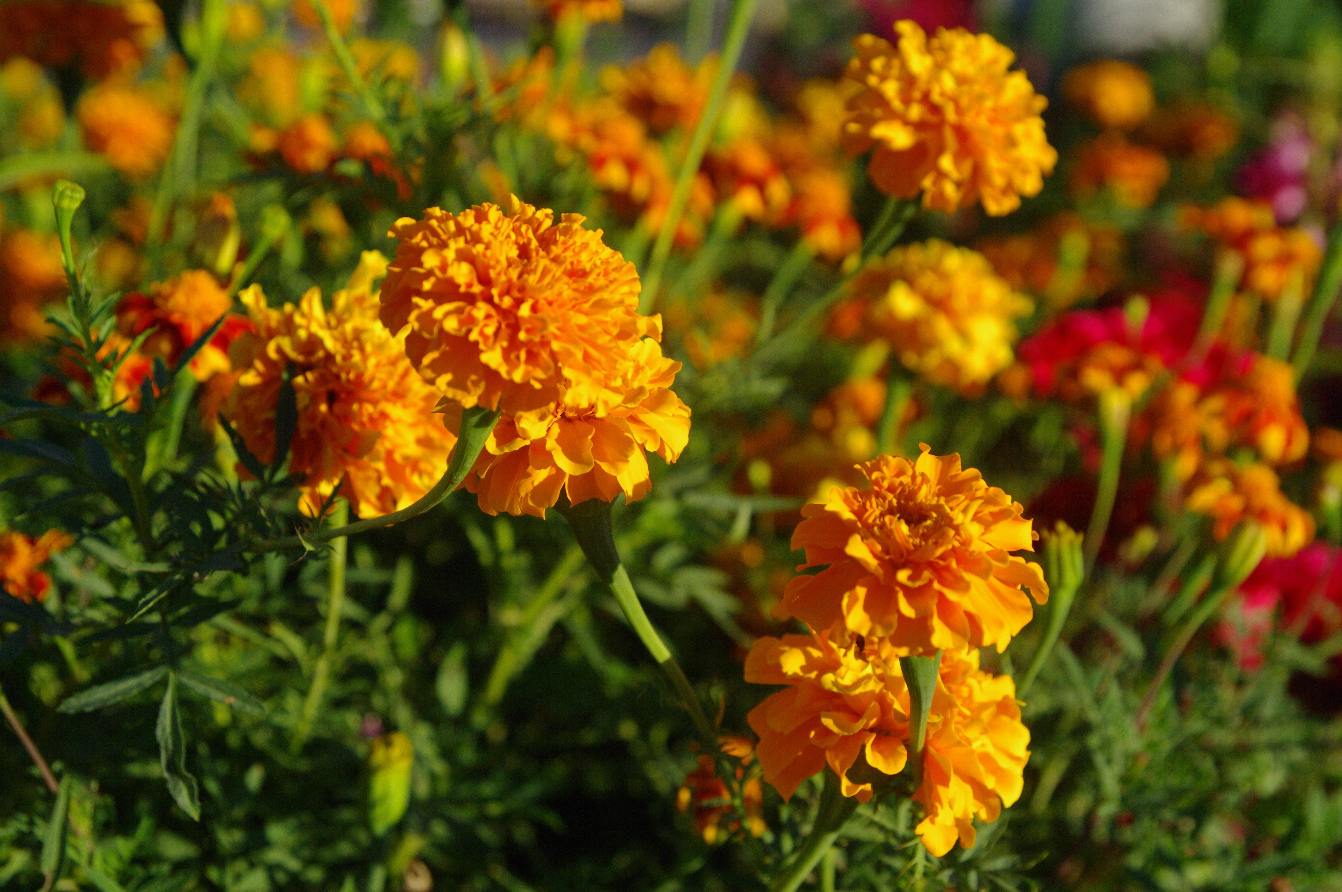 去赏菊吧,给这个秋天增添点仪式感!(附科普)