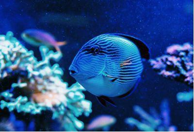 庆研学之旅】3D打印创意课,探寻海底两万里,还