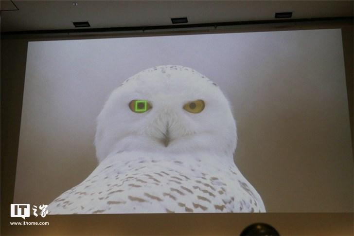 索尼將在α系列相機上加入動物眼部識別功能
