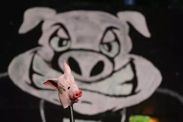 """生肖猪,天宇要掉落""""馅饼""""了,接住变身贱猪!"""