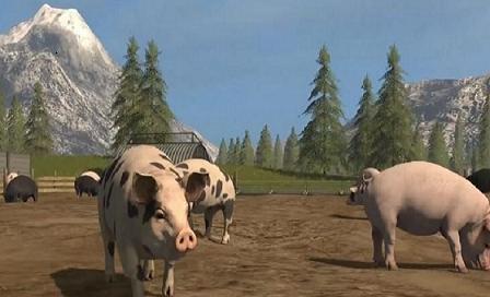人工智能进入养殖业,丁磊和马云如何让猪肉生意更高端?