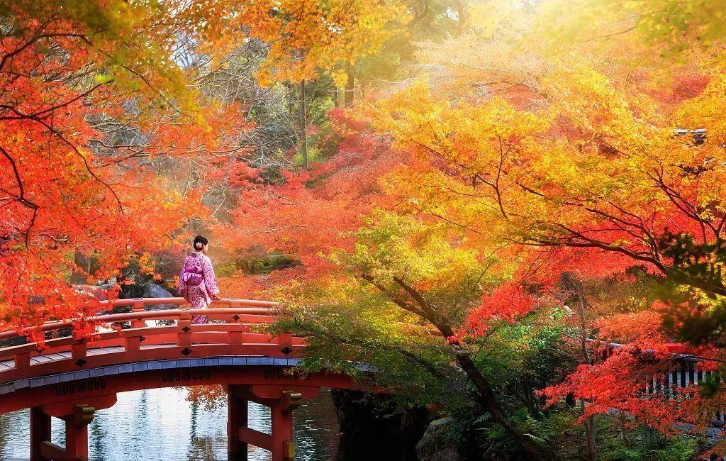 """最让日本人后悔,是误了比樱花还出名的""""红叶狩""""?图片"""