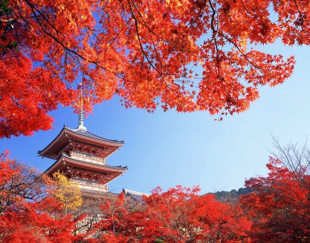 日本关西机场全面开放,红叶季提上日程!