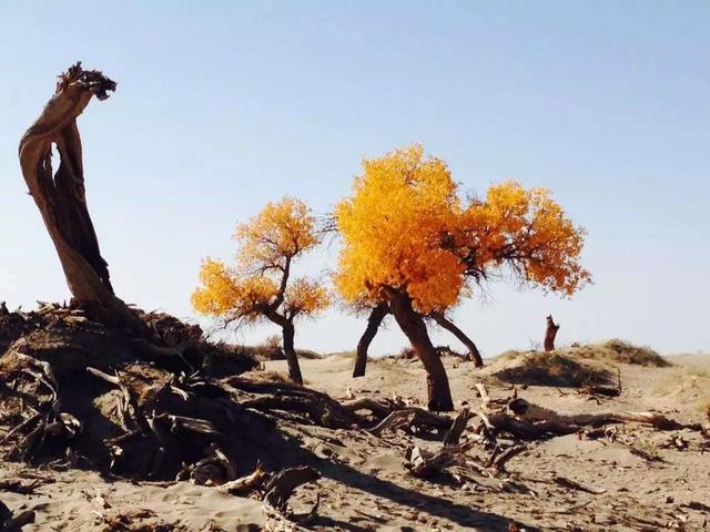 这个十月,这里有中国最美的胡杨林,你准备好了吗?