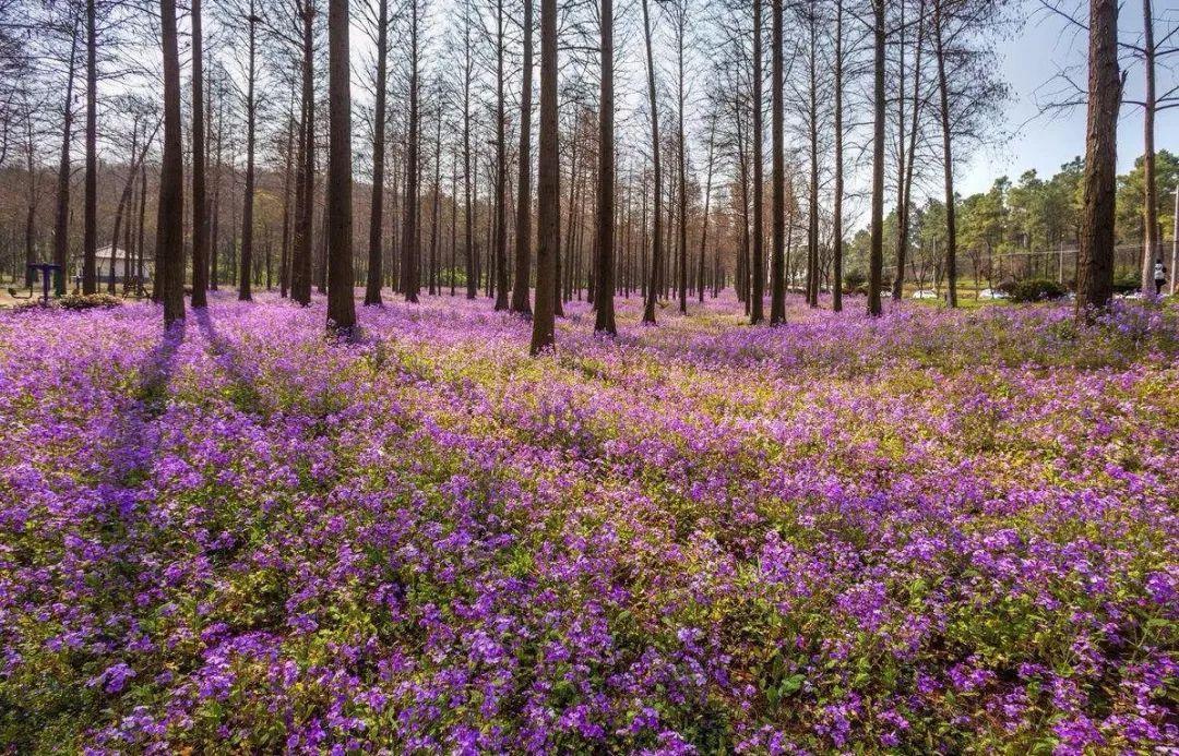 园林-植物大全之应用