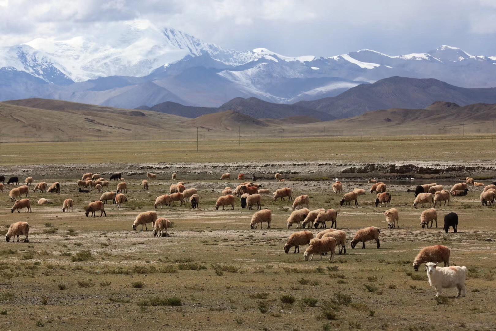 西藏不丹边境上的冰雪秘境40冰川 川藏线旅游攻略 第6张