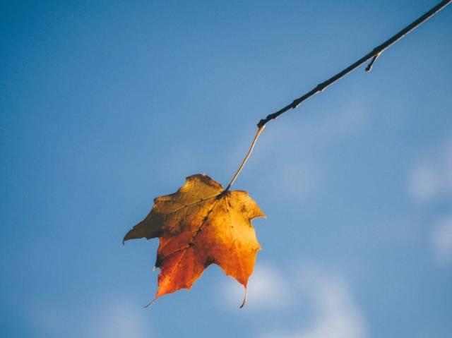 秋天的唯美句子 描写秋天景色优美句子