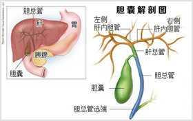 胆管 炎 急性