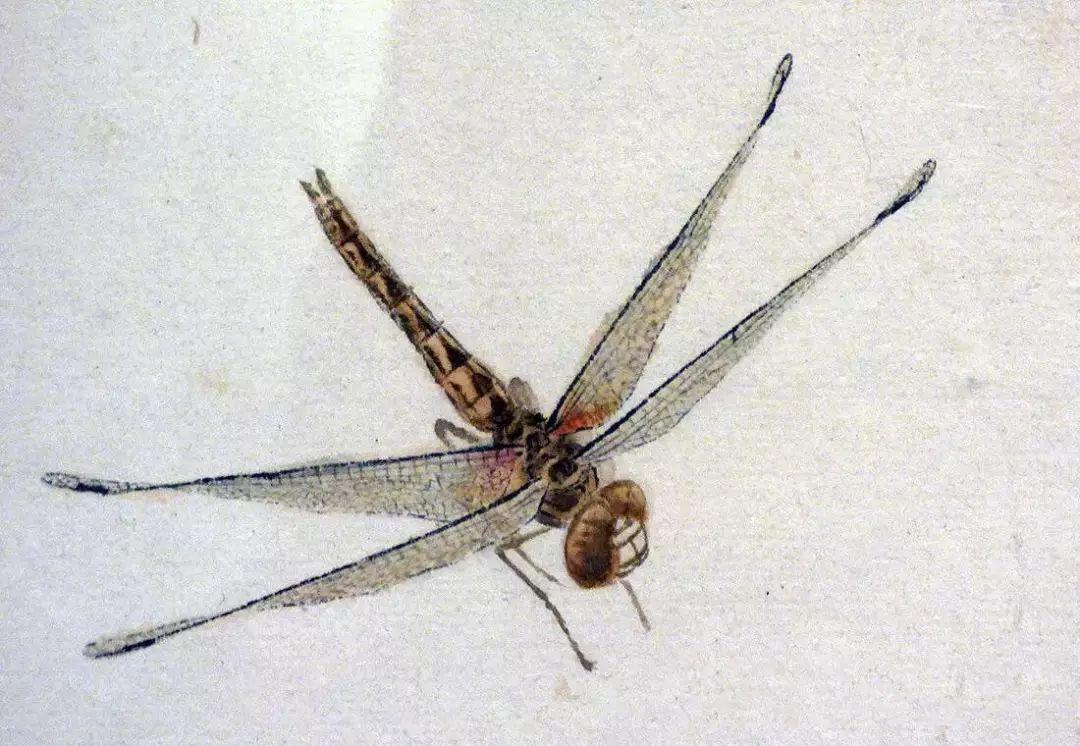 齐白石画蜻蜓