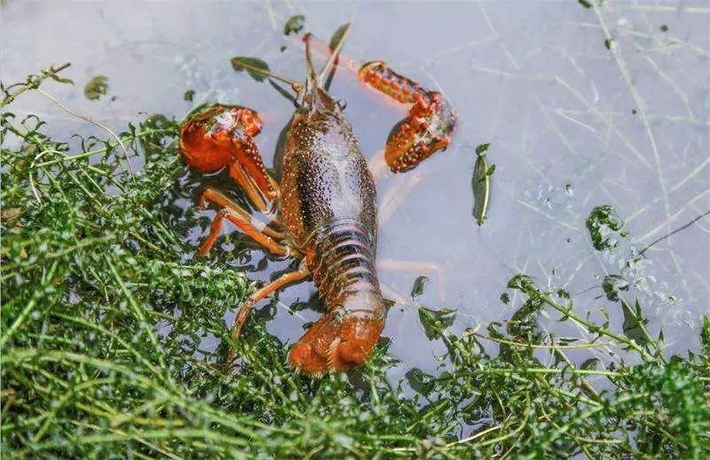 养殖户清除池塘野杂鱼,您试试这三个方法