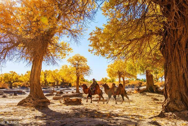 全国季节性最强的景区,每年只开一个月,最佳观赏期10月5号左右