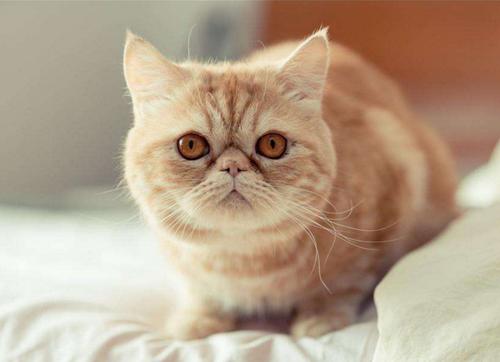 自制猫舍设计图