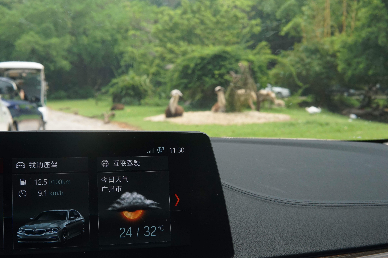 驾着宝马530Le去游玩长隆野生动物世界是一种怎样的体验?