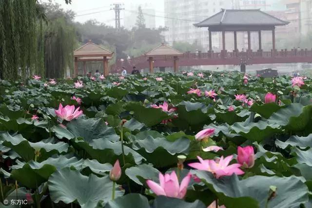 鄢陵 gdp_鄢陵花博园