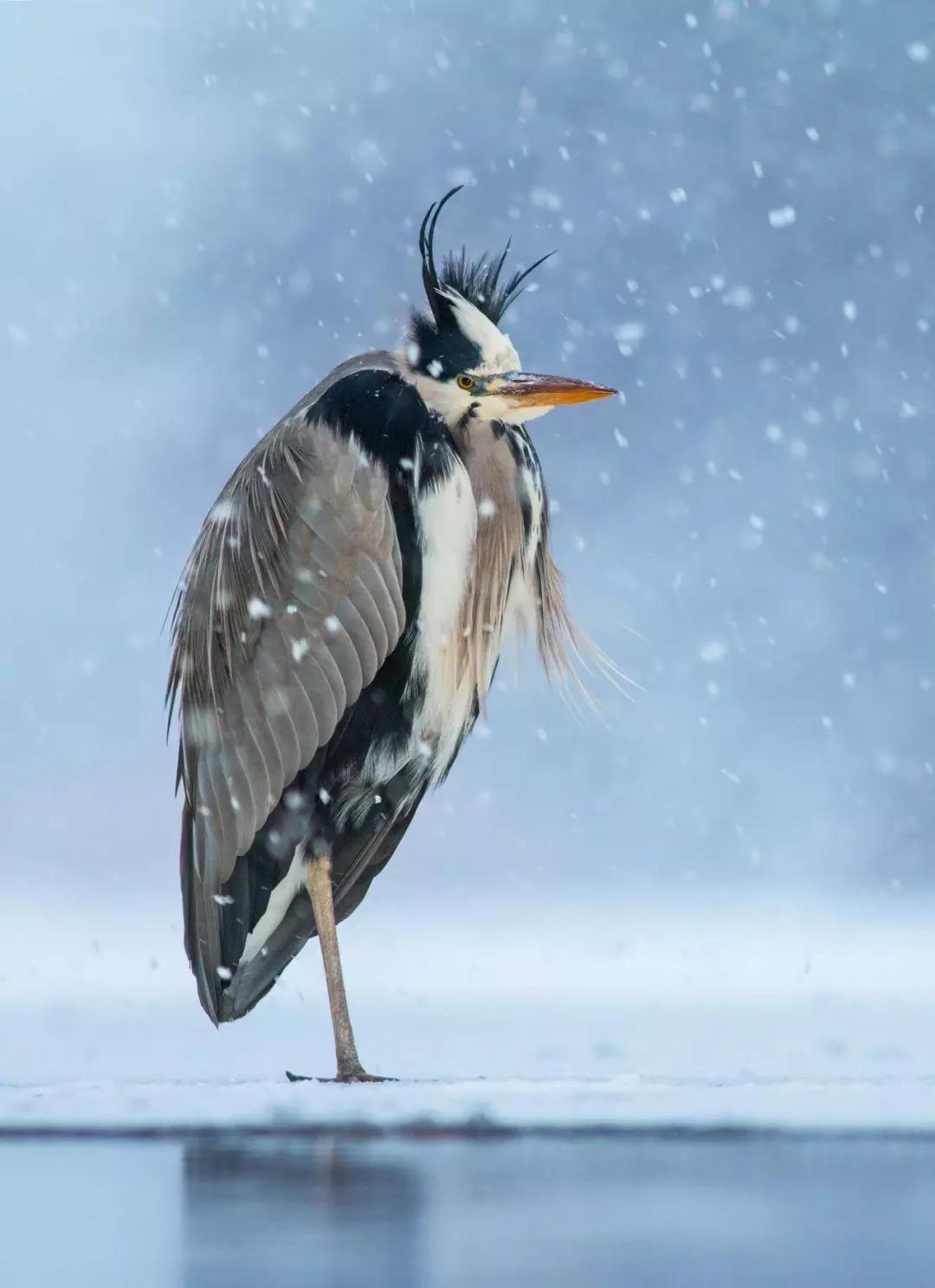 鸟类大全鸟名鸟图片