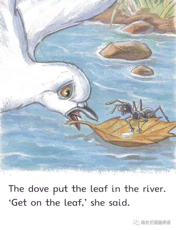 幼儿园鸽子绘本图片