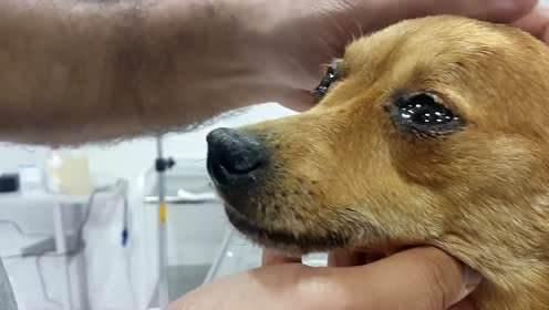 你家狗狗會哭嗎?狗狗落淚的5個原因,看完有點心塞!-華夏娛樂360