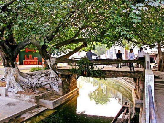 廣東有一座擁有生命的橋,有著300多年的歷史,時間越久越結實