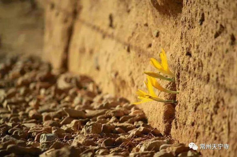 盘点逆境中生长的植物(网页截图)