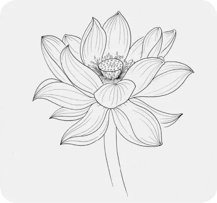 【手绘微课堂】唯美针管笔花卉线描