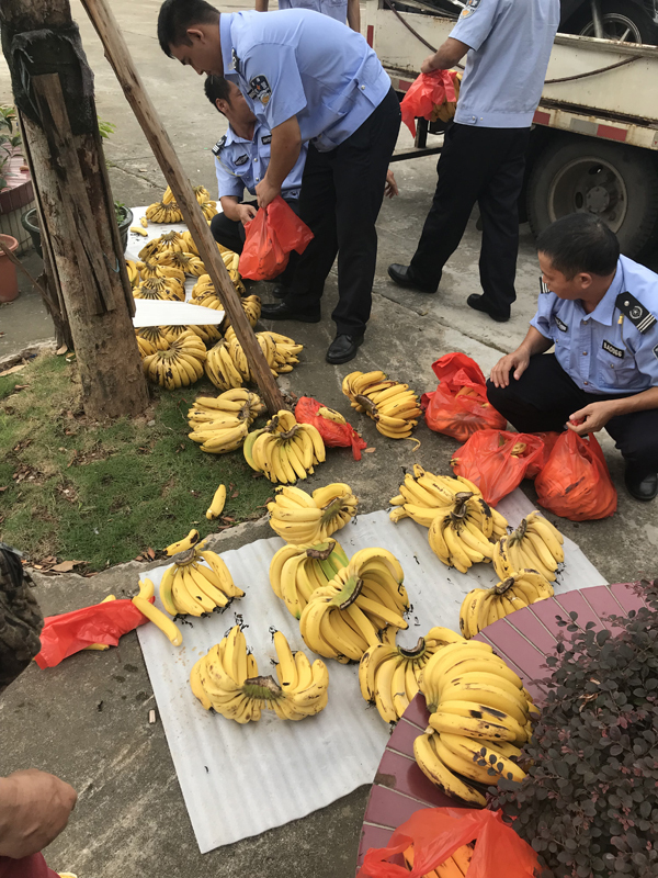 小販無證駕駛運香蕉被拘十日,佛山交警湊錢將一車香蕉買下