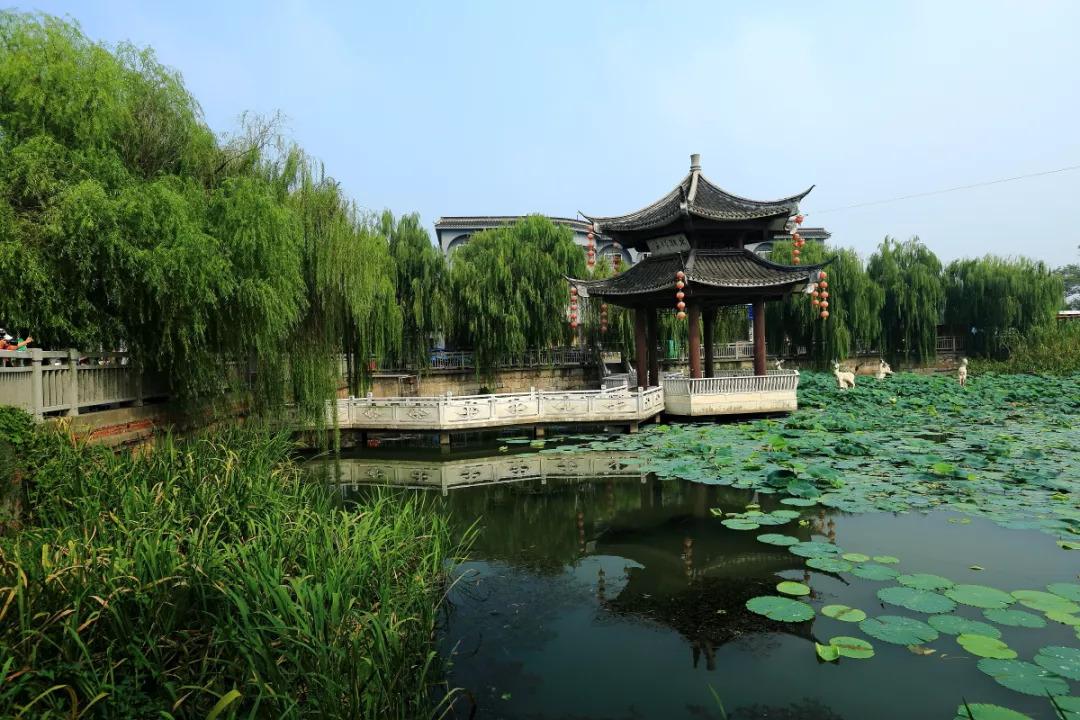 下午参观 国家5a级风景区,首批国家级湿地公园——溱湖风景区 ( 参观