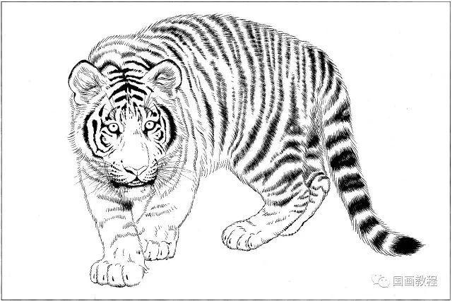 100副老虎,马等各种动物的白描合集 太全了,转发收藏了