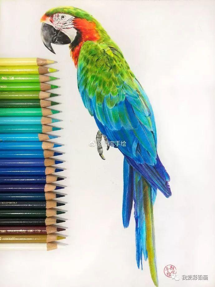 彩铅手绘 一只鹦鹉
