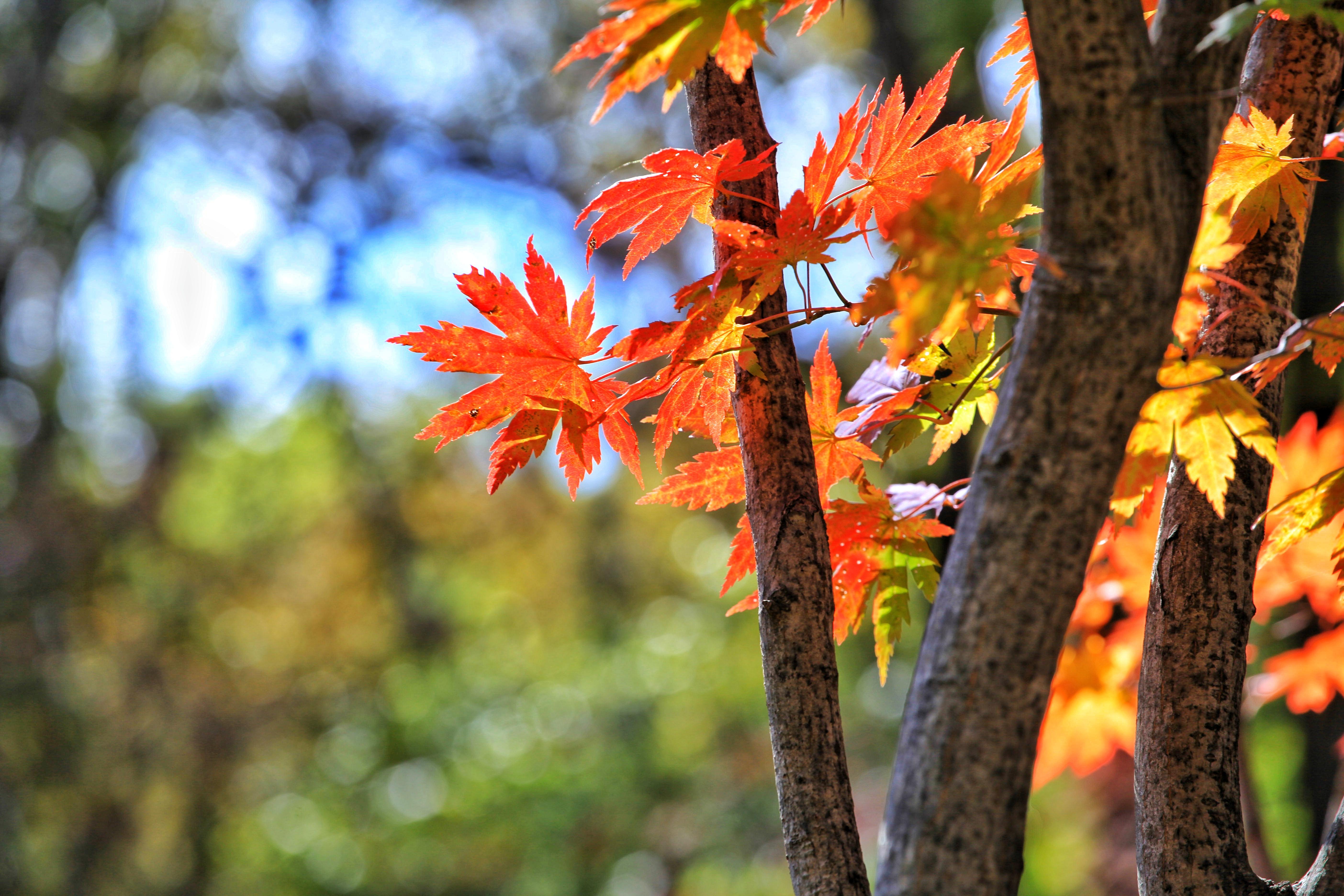 十一赏枫圣地推荐,本溪老边沟红叶惊艳到爆