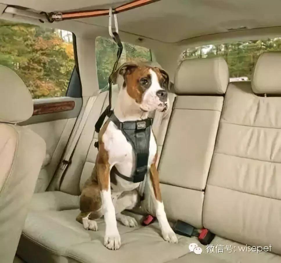 金秋十月,让我们来一场说走就走的旅行!——乘车指南