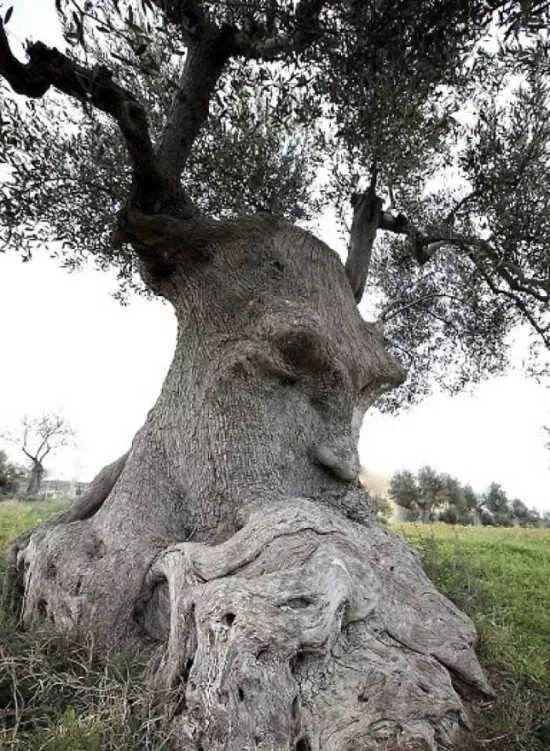 视觉奇观:大自然中的真·树精!