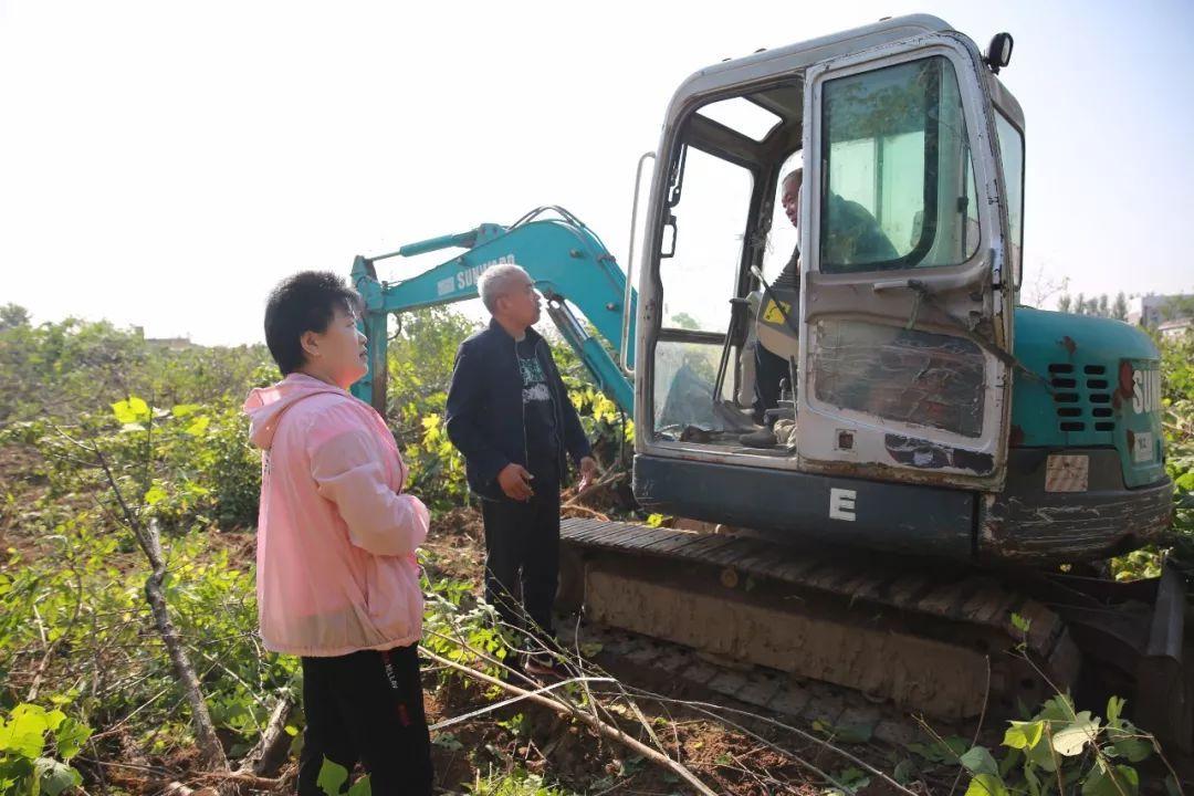10月3日,西清社区歌尔项目区剩余40亩树木清表全面开清,预计当天将